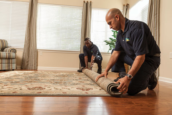 Read more about the article Reasons to Hire Professional Carpet Cleaner in Florida