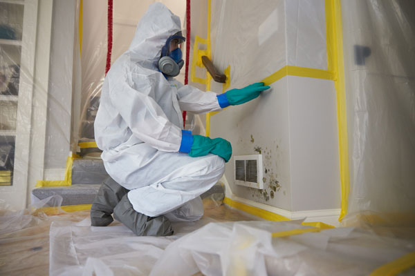 Read more about the article 3 Reasons to Get Mold Cleaned by a Professional
