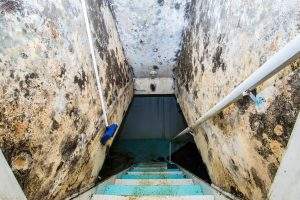 Read more about the article 3 Reasons to Get Mold Cleaned by a Professional – Fort Myers FL