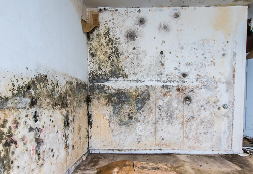 Read more about the article Water Damage and Mold Remediation in a Naples Condo