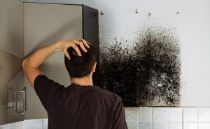 Read more about the article How to Prevent with Mold and Mildew in your Home