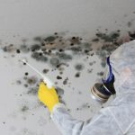 Mold Removal - ServiceMaster by Wright