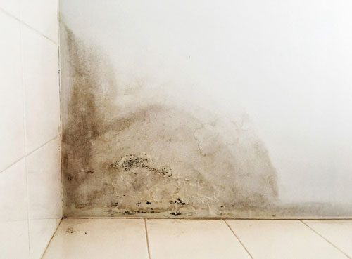 Read more about the article How Fast Can Mold Grow?