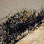 mold-in-the-house