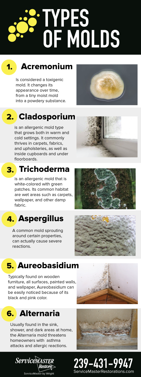 Read more about the article Top 6 Risky Types of Molds Possible in Your Home in Southwest Florida