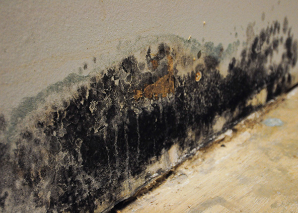 Read more about the article Can You Get Sickness from Mold?