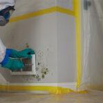 Restore Mold Damage