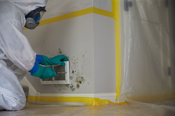 Read more about the article How Mold Removal In Cape Coral Works? Know All From Here!